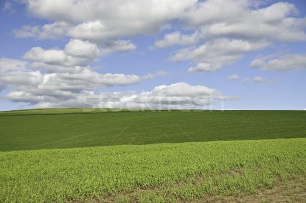 облака зеленый холмы большой пушистый Сток-фото © stockfrank