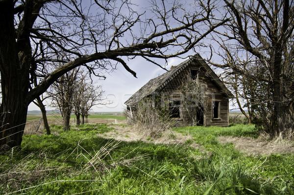 старые домой запустить вниз дерево Сток-фото © stockfrank