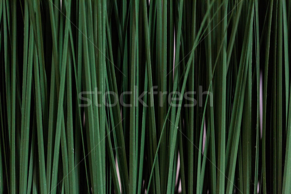 Fresh green rice seedlings Stock photo © stockyimages