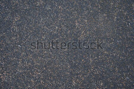 Black soil texture Stock photo © stockyimages