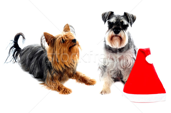 Two cute lovable pets Stock photo © stockyimages