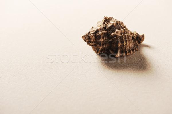 Kagylók tengerparti homok szoba másolat szöveg Stock fotó © stokkete