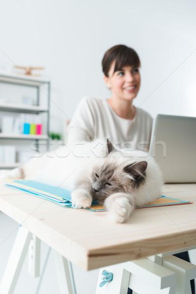 Photo stock: Chat · couché · bureau · dormir · bureau · fichiers