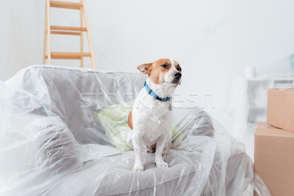Dog enjoying his new house Stock photo © stokkete