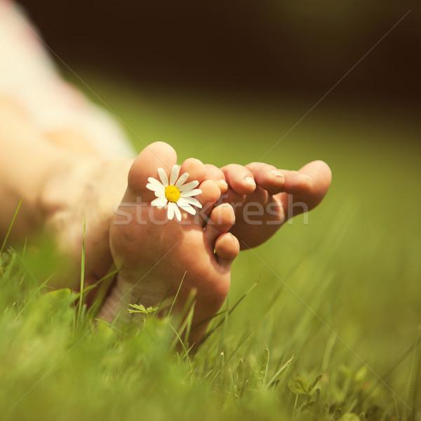 Verano sentimientos Daisy hierba verde espacio de la copia Foto stock © stokkete