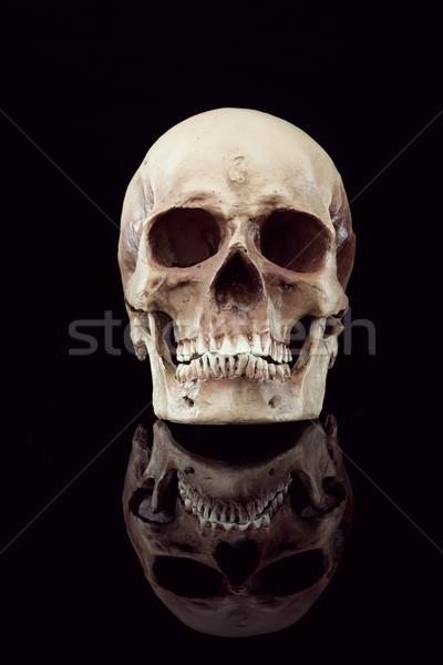 人間 頭蓋骨 自然 フロント 表示 黒 ストックフォト © stokkete