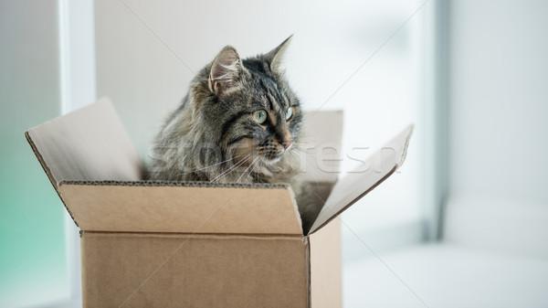 Gyönyörű macska kartondoboz hosszú haj ül másfelé néz Stock fotó © stokkete