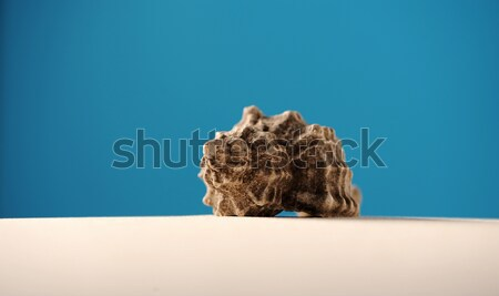 shells on beach sand with room for copy or text Stock photo © stokkete