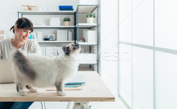 Gato escritorio curioso femenino mirando ventana Foto stock © stokkete
