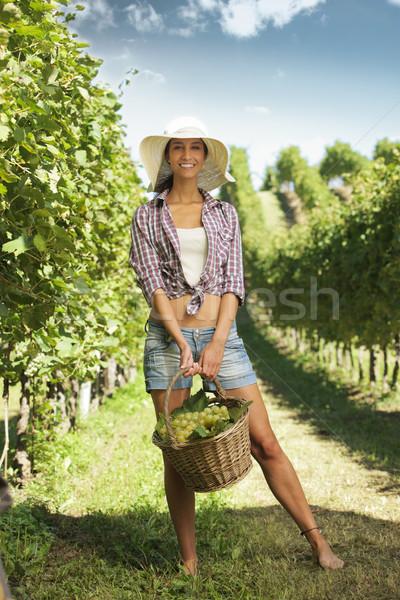 vintner picking grapes in a vineyard Stock photo © stokkete