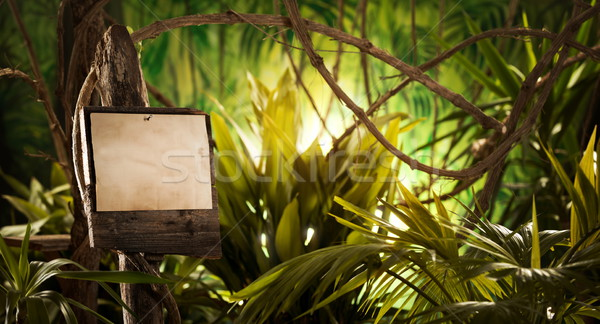 Wooden sign in the jungle Stock photo © stokkete