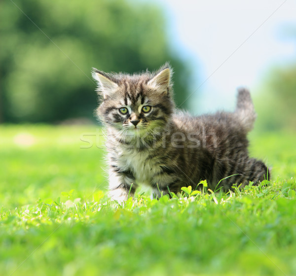 Stock photo: Kitty