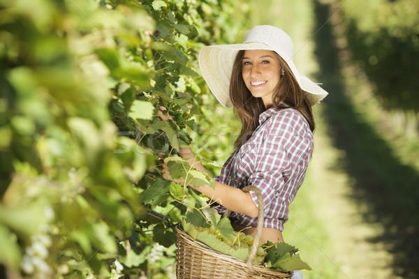 Aratás szőlő fiatal paraszt nő szőlőskert Stock fotó © stokkete
