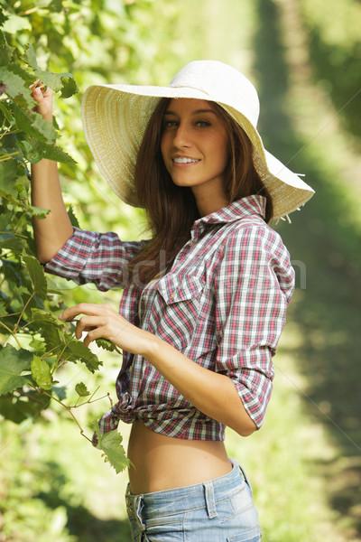 Szőlőskert fiatal paraszt nő munkás ősz Stock fotó © stokkete