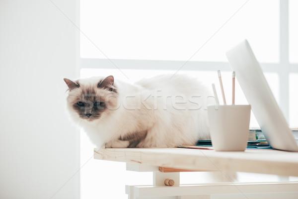 Lovely cat sitting on the desk Stock photo © stokkete