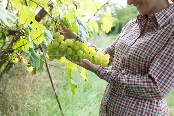 Gazda szőlőskert mosolyog női szőlő bor Stock fotó © stokkete