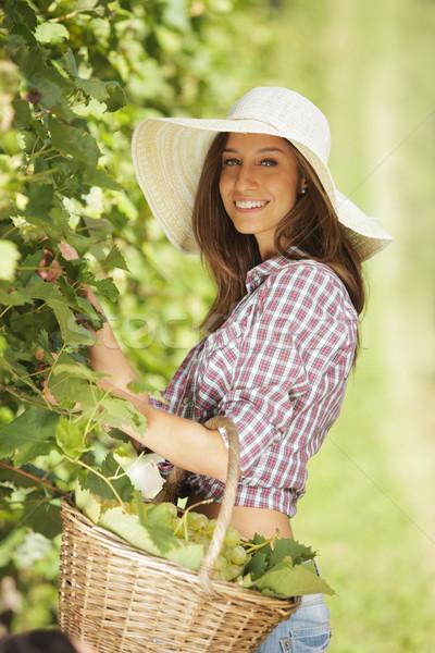 винограда молодые крестьянский женщину виноградник Сток-фото © stokkete