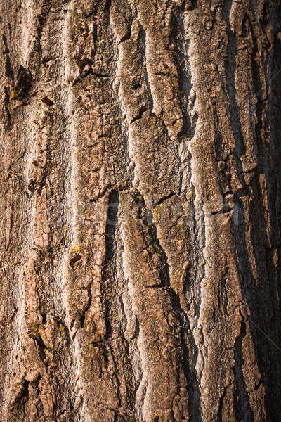 Mintázott fa ugatás természetes durva felület Stock fotó © stokkete