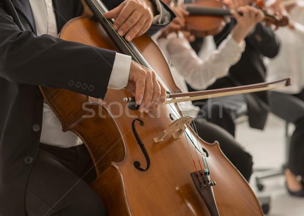 Cello spelers handen professionele Stockfoto © stokkete