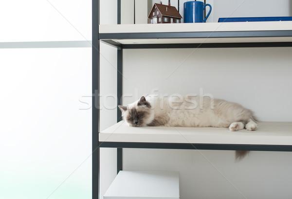 Güzel kedi keşfetmek raflar ev uyku Stok fotoğraf © stokkete