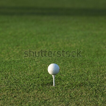 golf ball on green grass Stock photo © stokkete