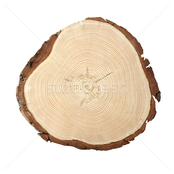 древесины поперечное сечение линия роста Сток-фото © stokkete