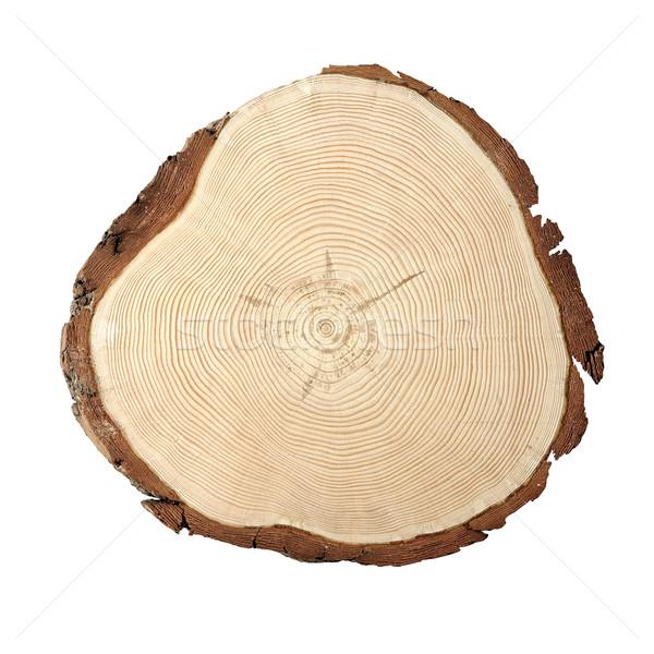 Wood cross section Stock photo © stokkete