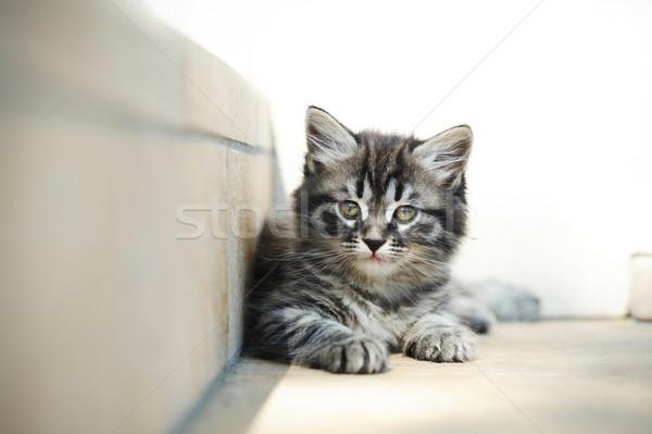kitten relax Stock photo © stokkete