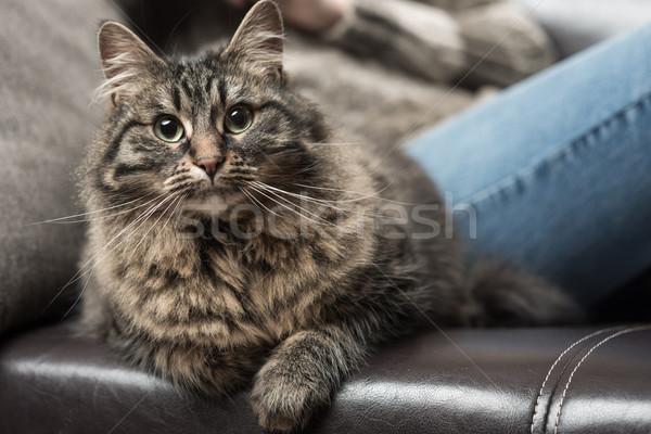 Belo gato sofá mulher jovem couro mulher Foto stock © stokkete