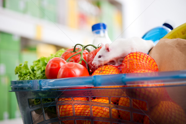 Cute mouse on full shopping cart Stock photo © stokkete