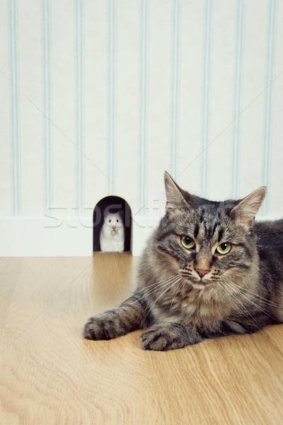 Muis gat kat uit mooie wachten Stockfoto © stokkete