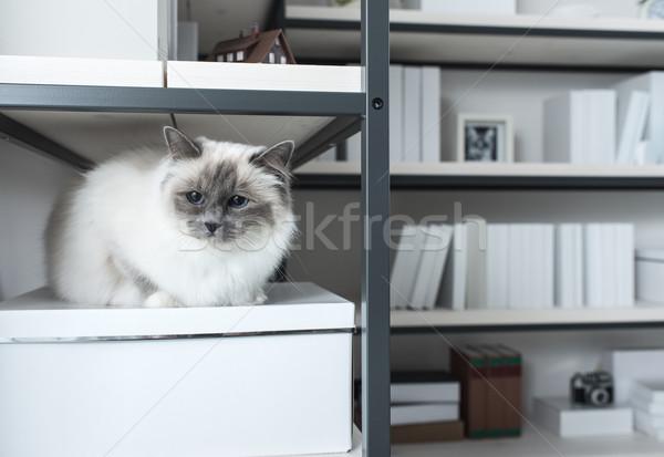 Beautiful cat exploring shelves Stock photo © stokkete
