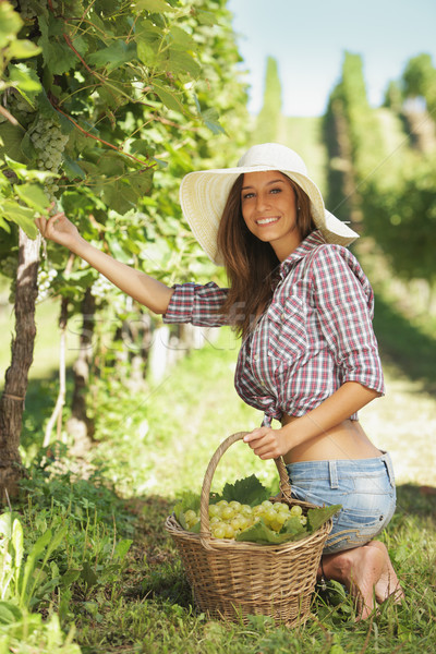 Harvesting the grape Stock photo © stokkete