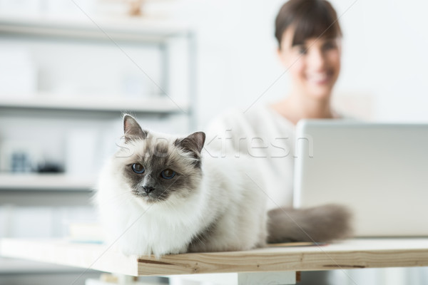 Lovely cat posing on a desk Stock photo © stokkete