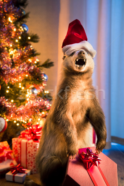 Christmas badger Stock photo © stokkete