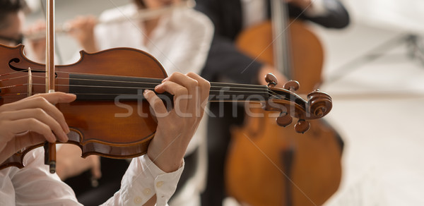 Orchestra string section performing Stock photo © stokkete