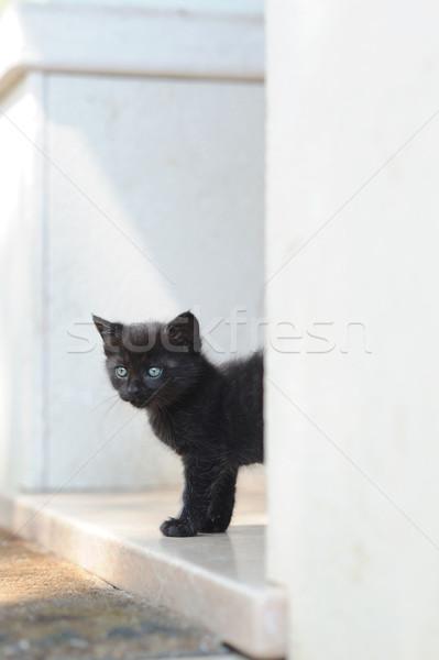 Primeiro tempo fora casa preto gatinho Foto stock © stokkete