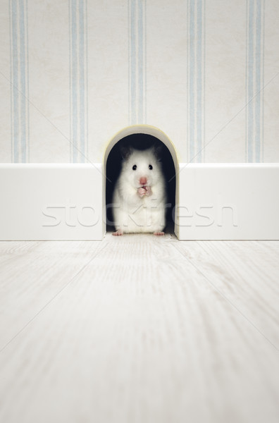 Hamster standing in his lair Stock photo © stokkete