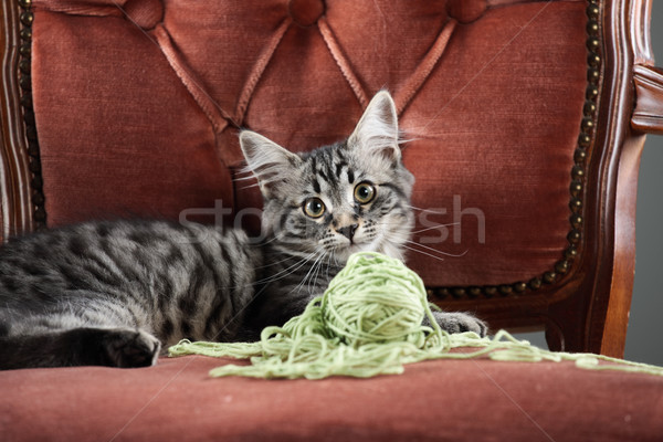 Kitten playing with a ball of wool Stock photo © stokkete