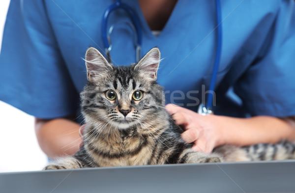 Veteriner sevimli kedi atış Stok fotoğraf © stokkete