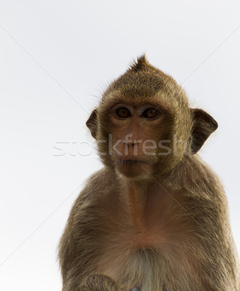 Macaco bebê cara olhos Foto stock © stoonn