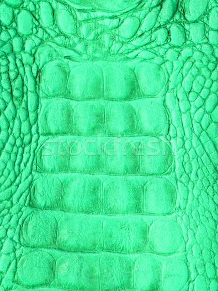 Crocodile skin Stock photo © stoonn