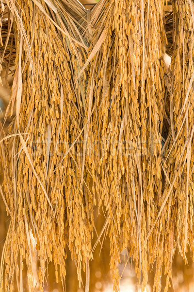 Dry paddy rice Stock photo © stoonn