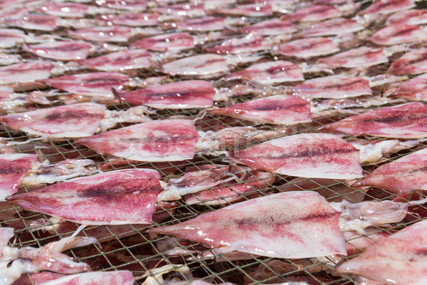 Stock photo: squid drying on net