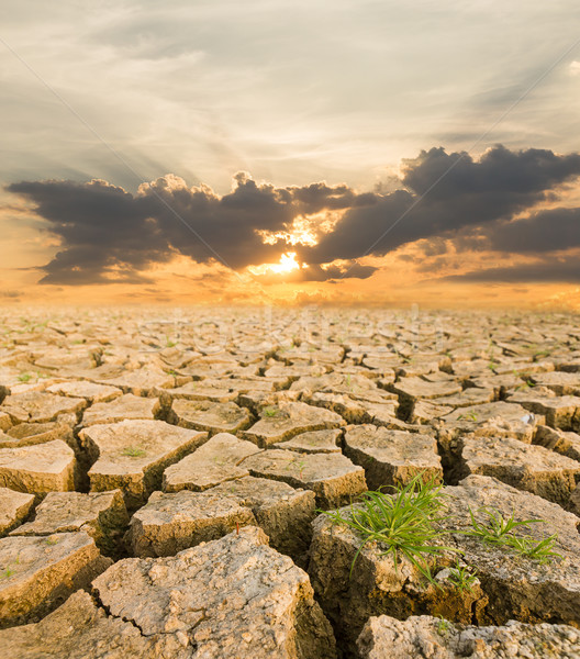 Drought land under the evening sunset  Stock photo © stoonn