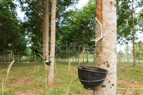 латекс резиновые дерево Таиланд промышленности Сток-фото © stoonn