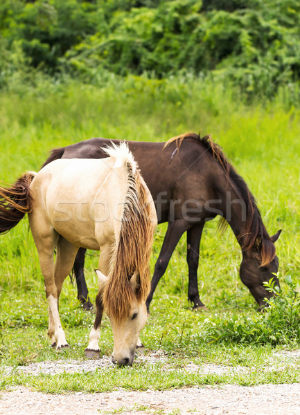 Horse in field  Stock photo © stoonn