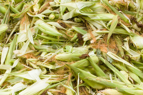 Fresh husk corn Stock photo © stoonn
