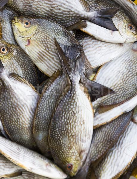 Rabbit Fish Stock photo © stoonn