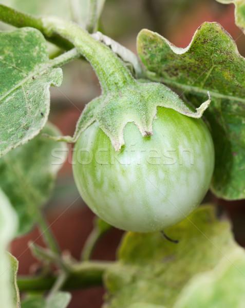 Yeşil hamamböceği meyve ağaç doğa bitki Stok fotoğraf © stoonn